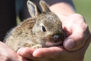 Hasenstall Kaninchenstall kaufen