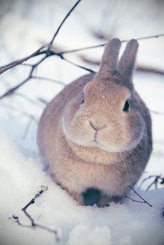 Hasenstall winterfest machen - Hase im Schnee