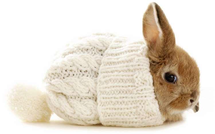 Hasenstall winterfest machen Hase mit Mütze