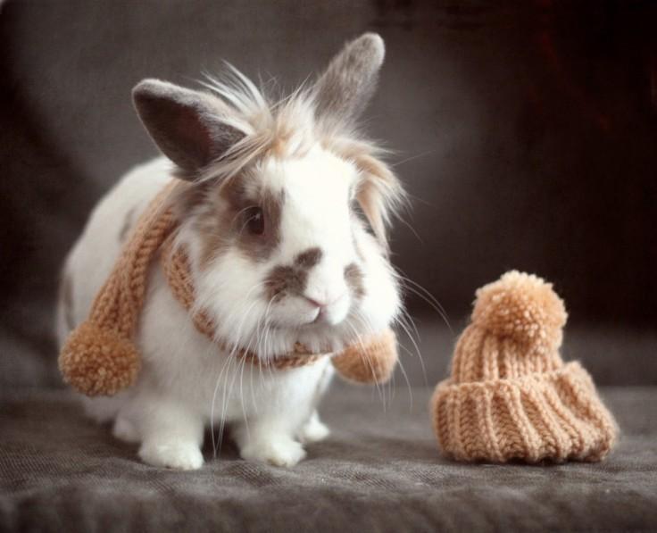 Hasenstall winterfest machen - Hase mit Schal