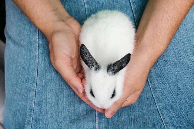 Kaninchen Bücher